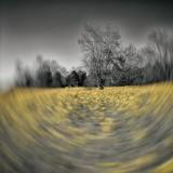 Mesmerizing Swirl of Gold