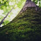 Moss Hanging on Tree